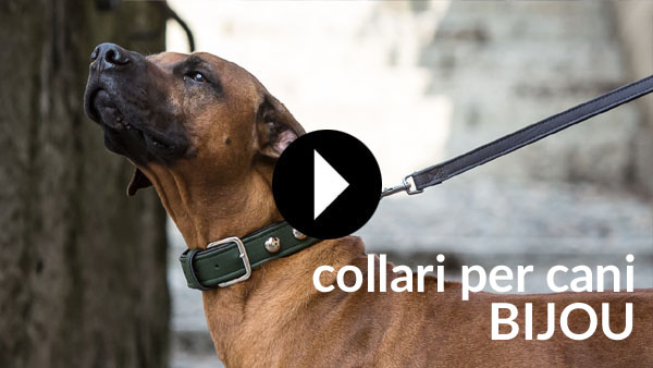 collari per cani bijou video